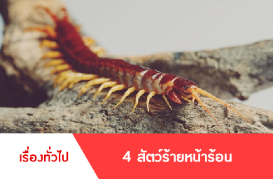 4 สัตว์ร้าย หน้าร้อน ต้องระวังให้ดี